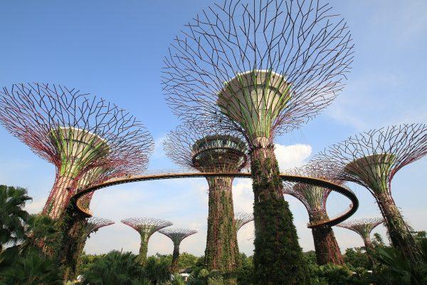 avio karte Beograd Singapur SIN - singapur dyinovsko drvece